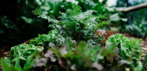 Garden update - May 2