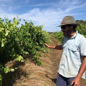 Q&A with natural winemaker Sam Vinciullo 2